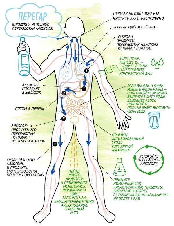 Таблица запаха алкоголя